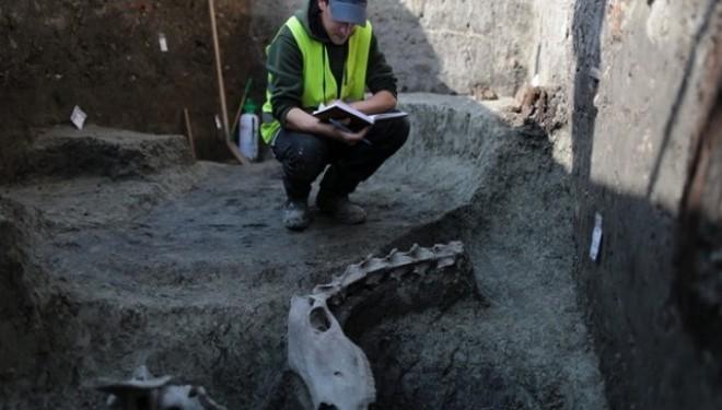 Cămilă de 500 de ani, descoperită la Timişoara
