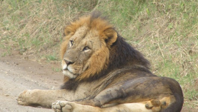 4 lei, ucişi la Zoo Copenhaga