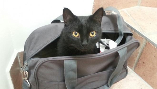 Miau! Astăzi este Ziua Internațională a Pisicii!