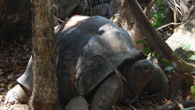 Pepe misionarul, favoritul turiștilor din Galapagos,  a decedat