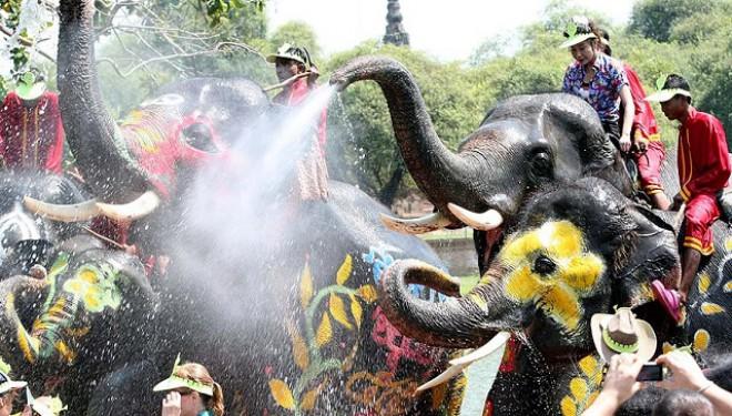 Songkran, Festivalul Apei: Elefanți pe post de duș