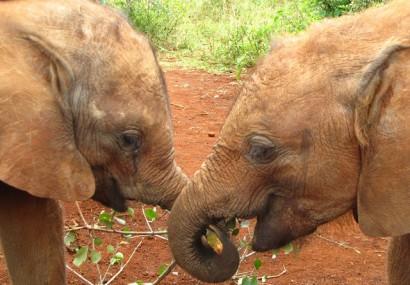 180 de experți discută despre protejarea elefanților