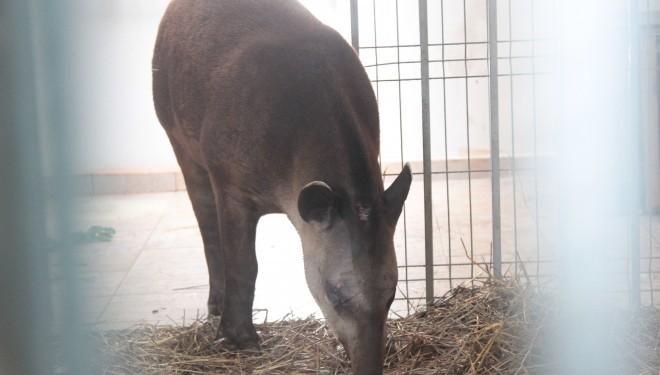 Grădina Zoologică Timișoara se vizitează gratuit, o zi