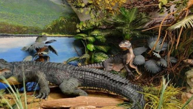 Descoperire fantastică în România: crocodilul pitic