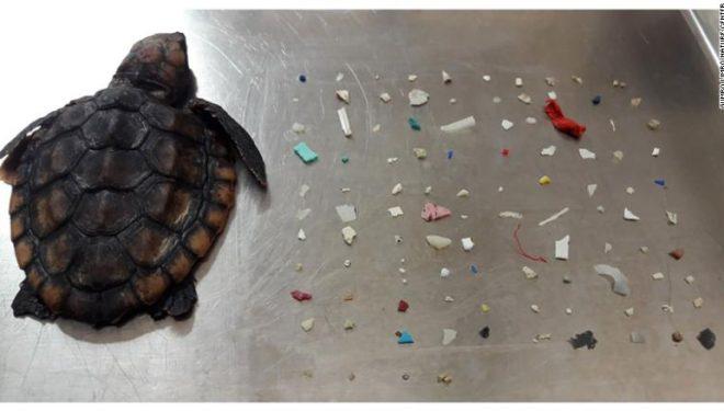 Peste unmiliondeanimale mor anualdin cauza plasticului din oceane