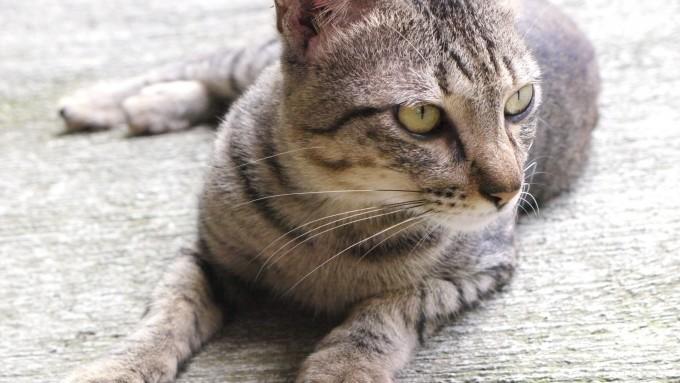 În Cipru, invazie de pisici