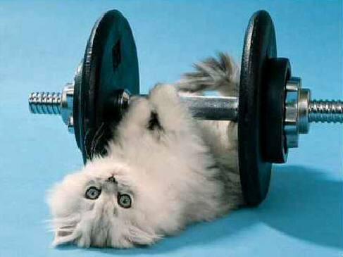Fitness pentru căţei şi pisici