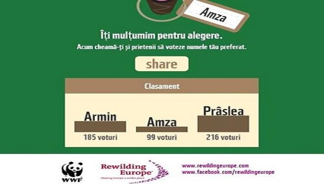 Armin, Amza sau Prâslea? Dați nume puiului de zimbru!