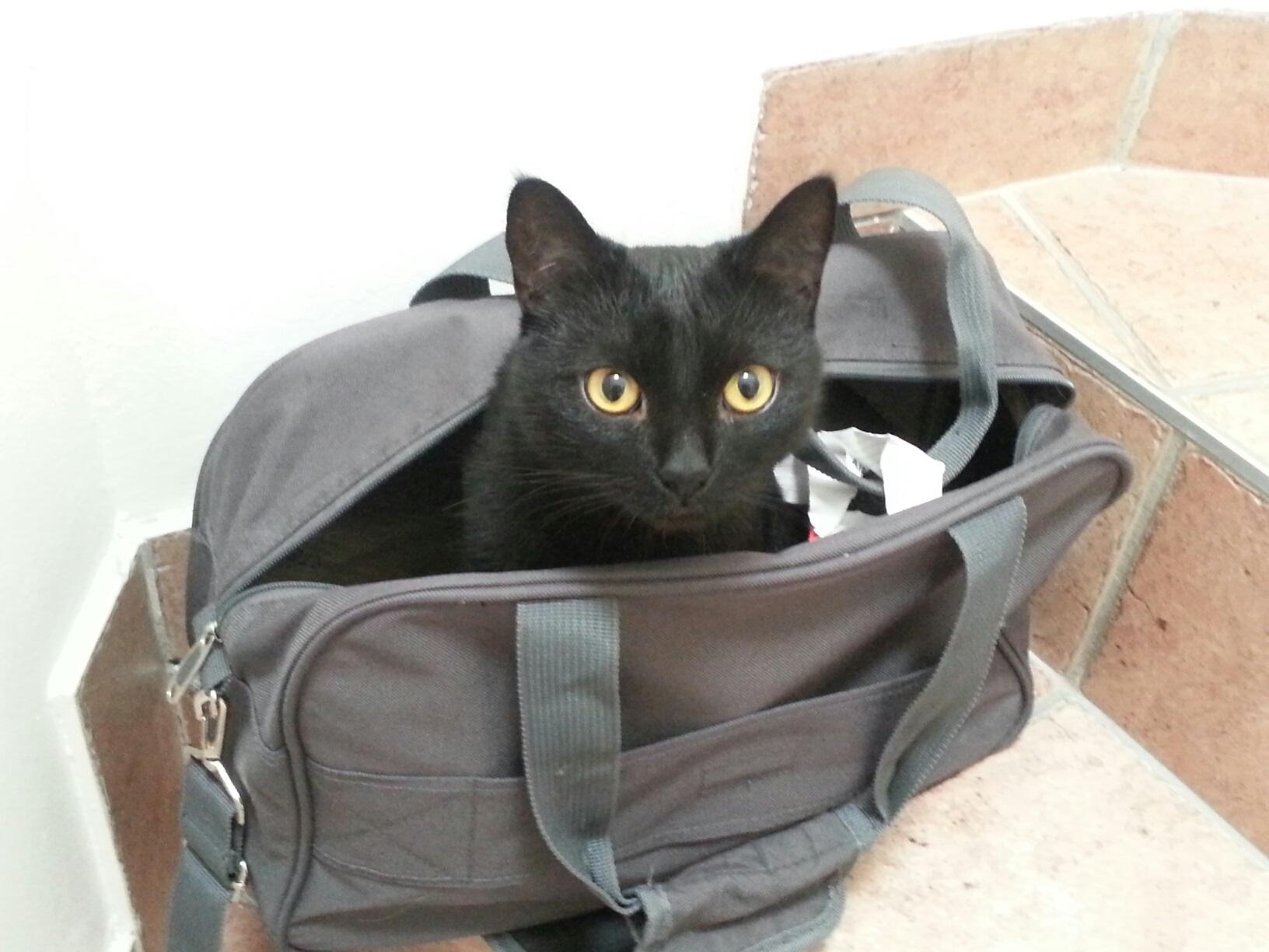 Ziua internationala a pisicii, 8 august. Horoscopul ... |Ziua Internațională A Pisicii