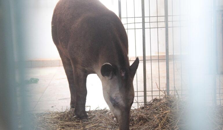 De Ziua Internațională a Grădinilor Zoologice şi Parcurilor ai acces GRATUIT și distracții printre animale, până seara