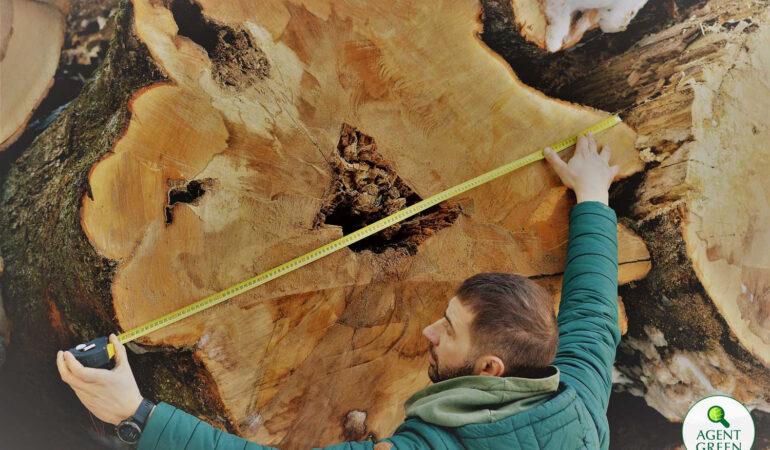 Semnal de alarmă. Copaci tăiați iresponsabil distrug vestigiile dacice de la Sarmizegetusa
