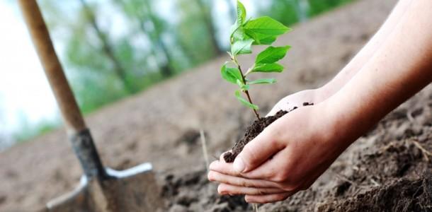 Idee de urmat: cum împădurești o țară