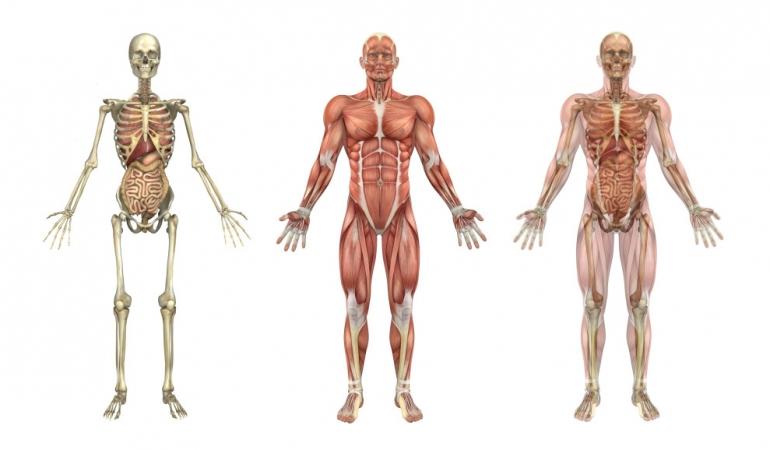 Misterele corpului uman:despre creier, miros, vise și…. bătăile inimii