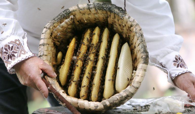 Mierea și albinele – beneficii și curiozități