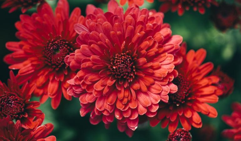Antofobia – frica de flori