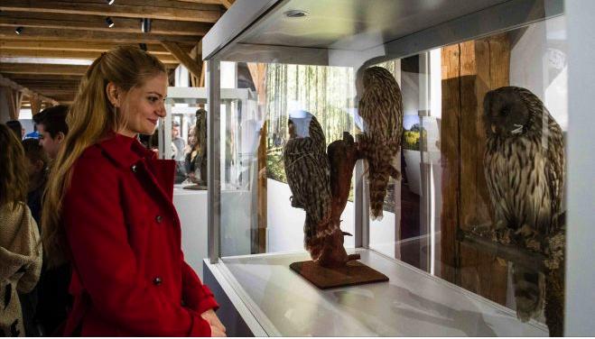 Păsările și fluturii nopții au pus stăpânire pe Muzeul Național al Banatului