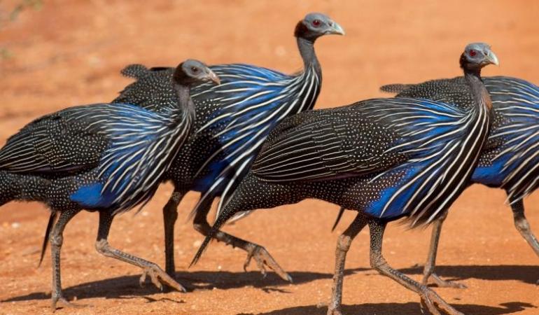 S-a descoperit prima societate complexă de păsări din lume