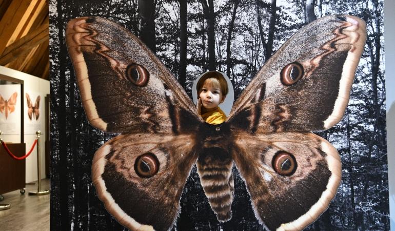 Ateliere cu bufnițe, fluturi și origami