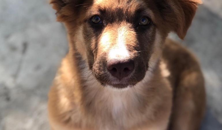 Știi câți ani are câinele tău? Un vechi mit – un nou studiu