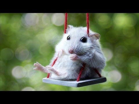 Musophobia – frica de șoareci sau șobolani