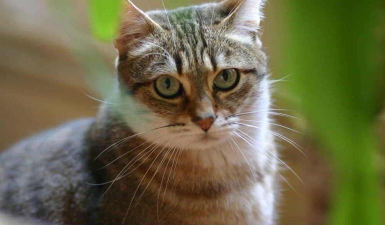 Pisica primar! Este acesta cel mai drăguț candidat din lume?