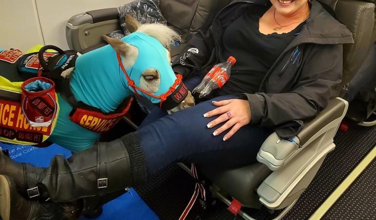 Un ponei, pasager într-un avion