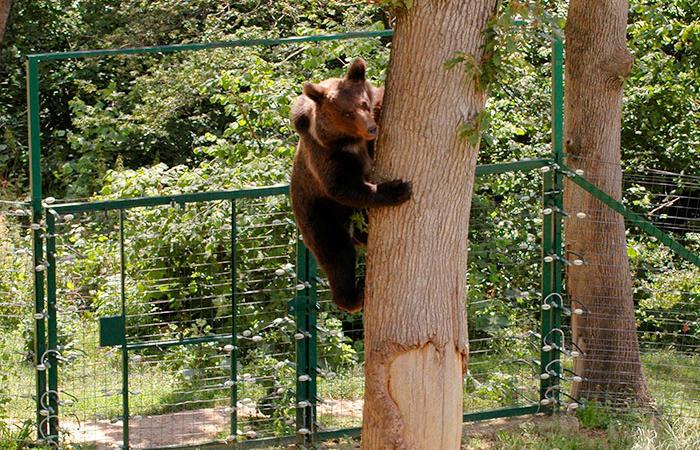 Știai că poți deveni părintele virtual al unui ursuleț? Fă o faptă bună – adoptă un urs!