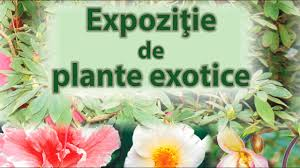 Expoziție de plante exotice la Iași