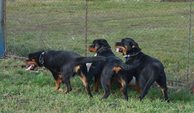 Cora, Rita și Civa, jandarmerițele cu patru picioare