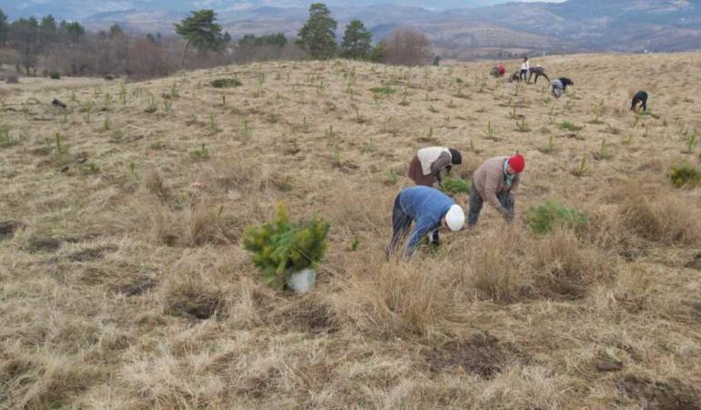 CAMPANIA ȘTIRI POZITIVE. 50.000 de puieți au fost plantați la Moinești