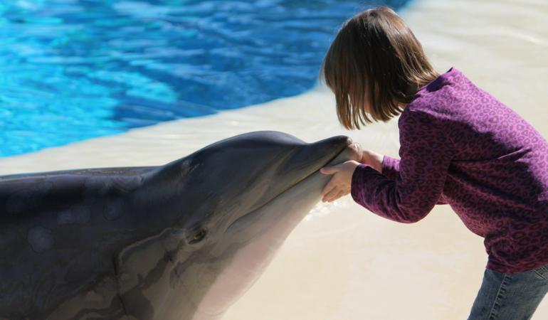 Motivul pentru care rechinii se feresc de delfini. Cine e învingător?