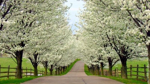 S-a lansat ultima prognoză pe luna aprilie- Cum va fi vremea de Paşte?