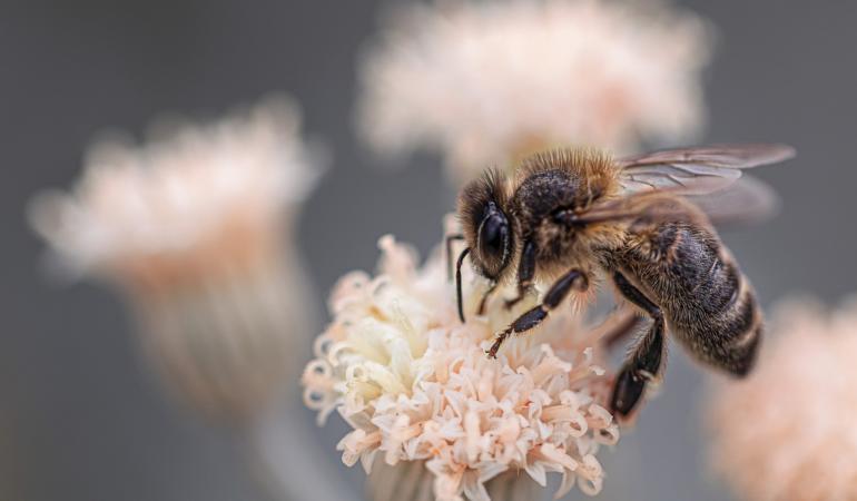 Apiphobia – frica de albine