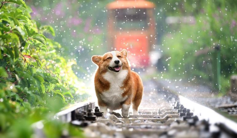 Câinii nu mai pot fi mâncați în China