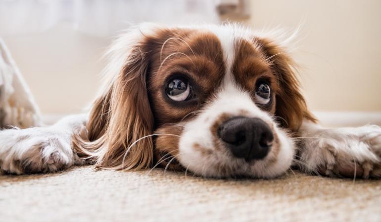 Cynophobia – frica de câini