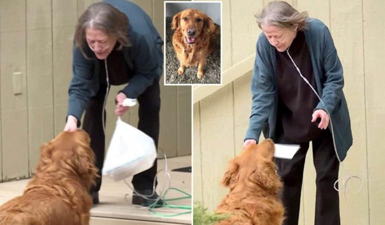 CAMPANIA ȘTIRI POZITIVE. Un câine îi face cumpărăturile vecinei sale zilnic