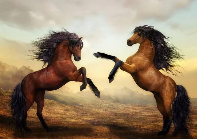 EXPRESIA SĂPTĂMÂNII – La Paștele cailor
