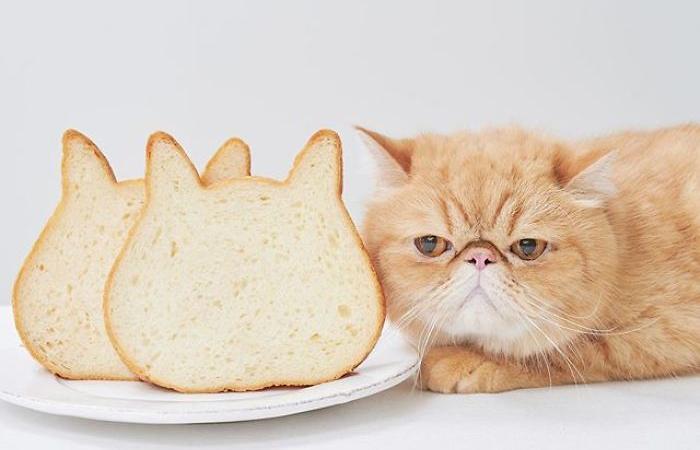 Pâinea în formă de pisică – o idee delicioasă din Japonia