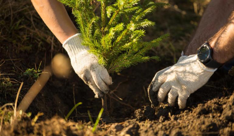 CAMPANIA ȘTIRI POZITIVE. Plantăm fapte bune în România – împăduriri fără voluntari