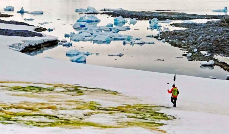 Zăpada albă din Antarctica devine verde. Magie sau miracolul naturii?