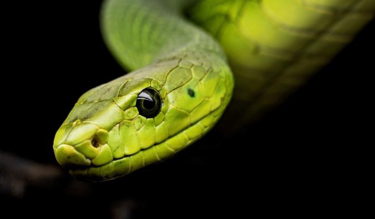 Ophidiophobia – frica de șerpi