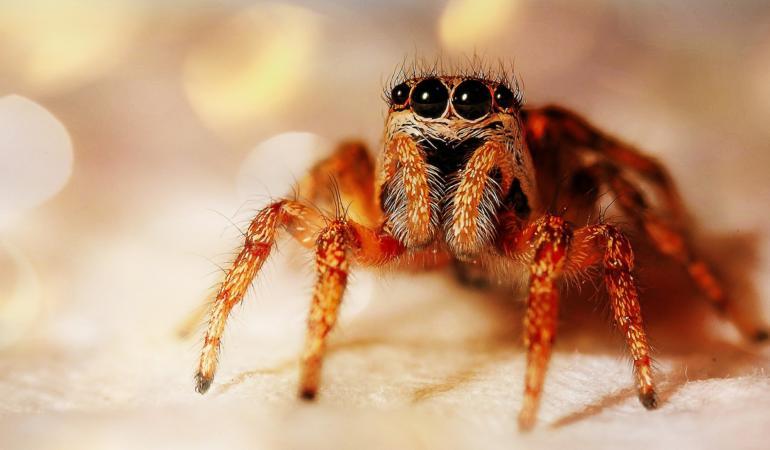 Arachnophobia – Frica de păianjeni