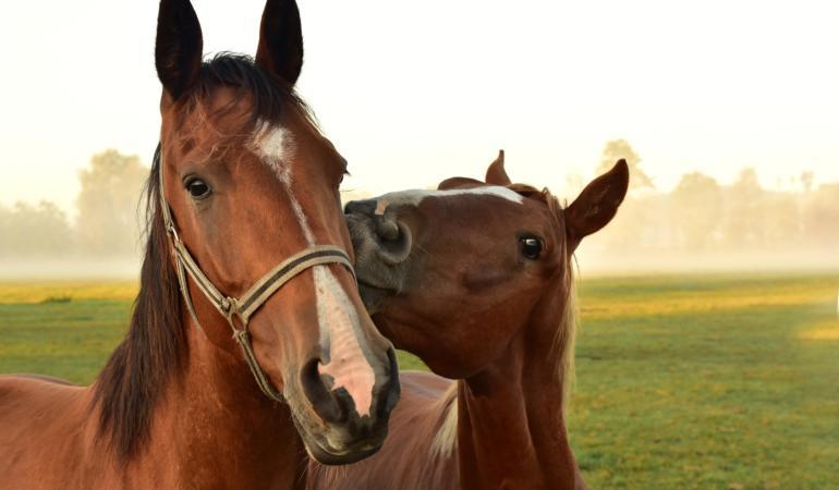 Equinophobia – frica de cai