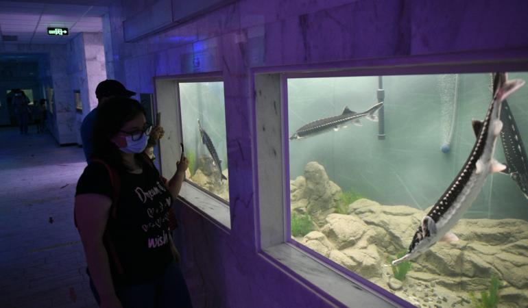 S-a redeschis acvariul de la Muzeul Regiunii Porților de Fier. Acces gratuit pentru copii