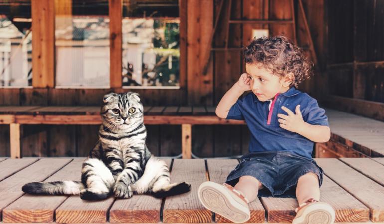 8 august – Ziua Internațională a Pisicii. De ce torc pisicile și câte rase există