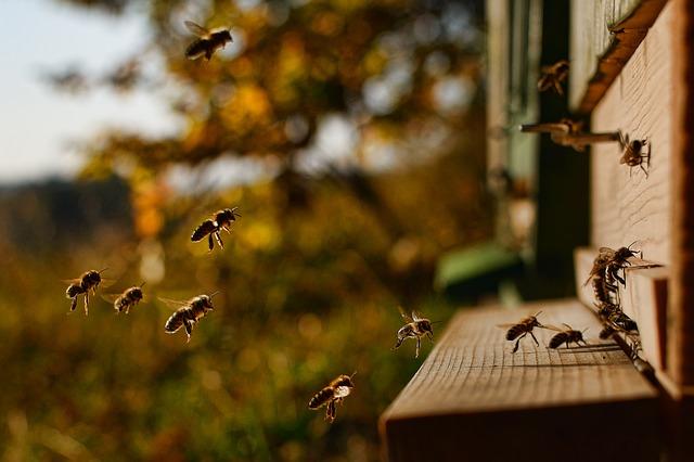Rareș Popovici, apicultor la 15 ani