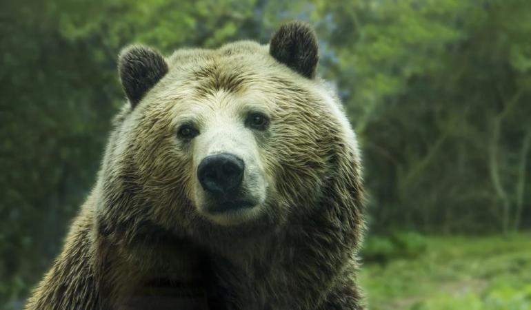 EXPRESIA SĂPTĂMÂNII – A vinde pielea ursului din pădure