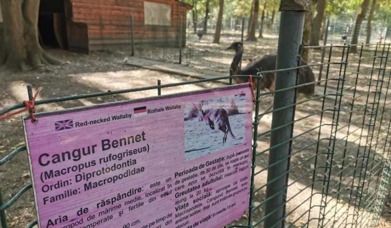 Grădina zoologică Timișoara- un loc al ororilor? Animalele mor în condiții de neimaginat