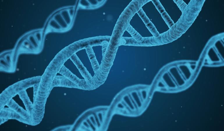 Ar putea fi clonarea salvarea planetei? Un cal sălbatic a fost clonat în Texas