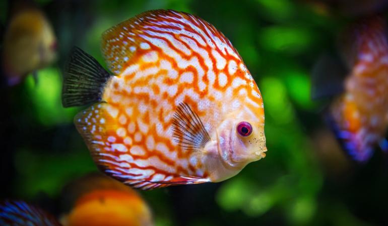 Ichthyophobia – frica de pești